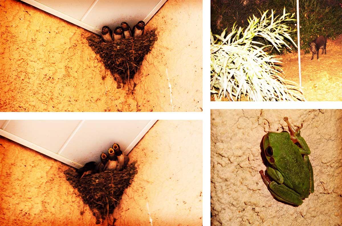 hirondelle sanglier grenouille corse ajaccio golfe de lava location villa maison