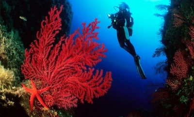 plongée du banc provençal au Golfe de Lava